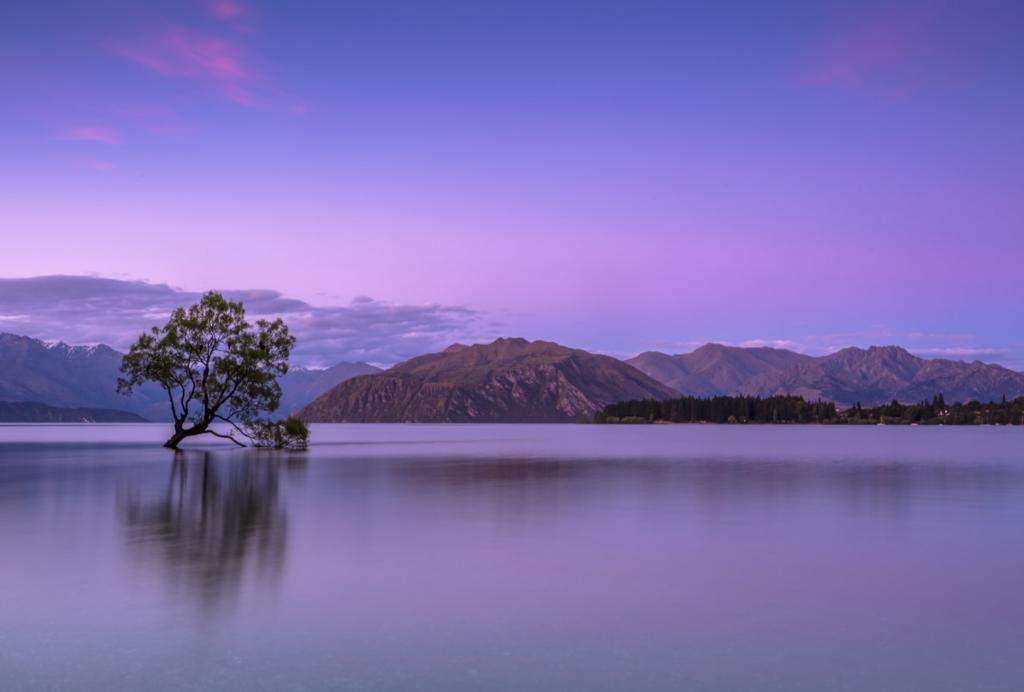 lago con arbol en medio